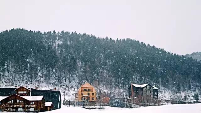 白 樺 林 和 村 落 。