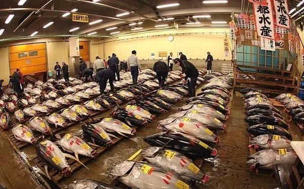 東 京 最 大 的 魚 市 場 : 築 地 市 場 。