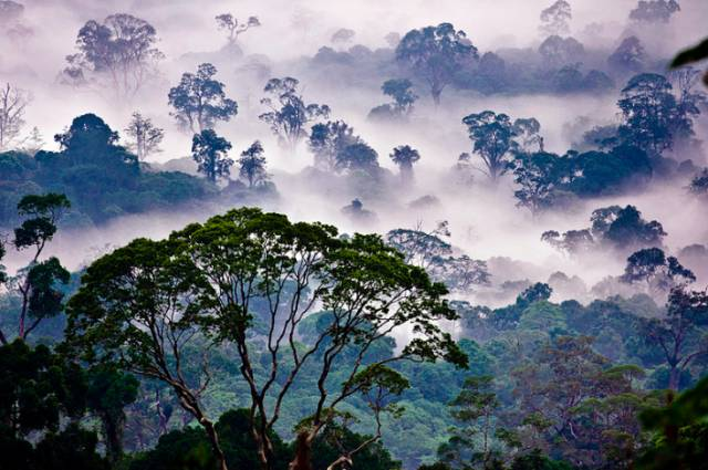 清 晨 的 丹 濃 谷 | Flickr:rob jeff。