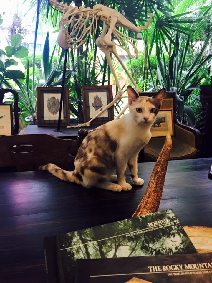 私密旅店 裡 陪 伴 度 過 早 餐 時 光 的 可 愛 貓 咪