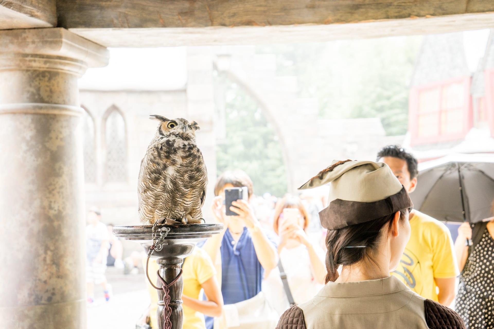大阪環球影城哈利波特,第二次來還是遇到!