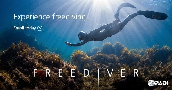 自 由 潛 水 需 要 先 克 服 對 於 水 的 恐 懼