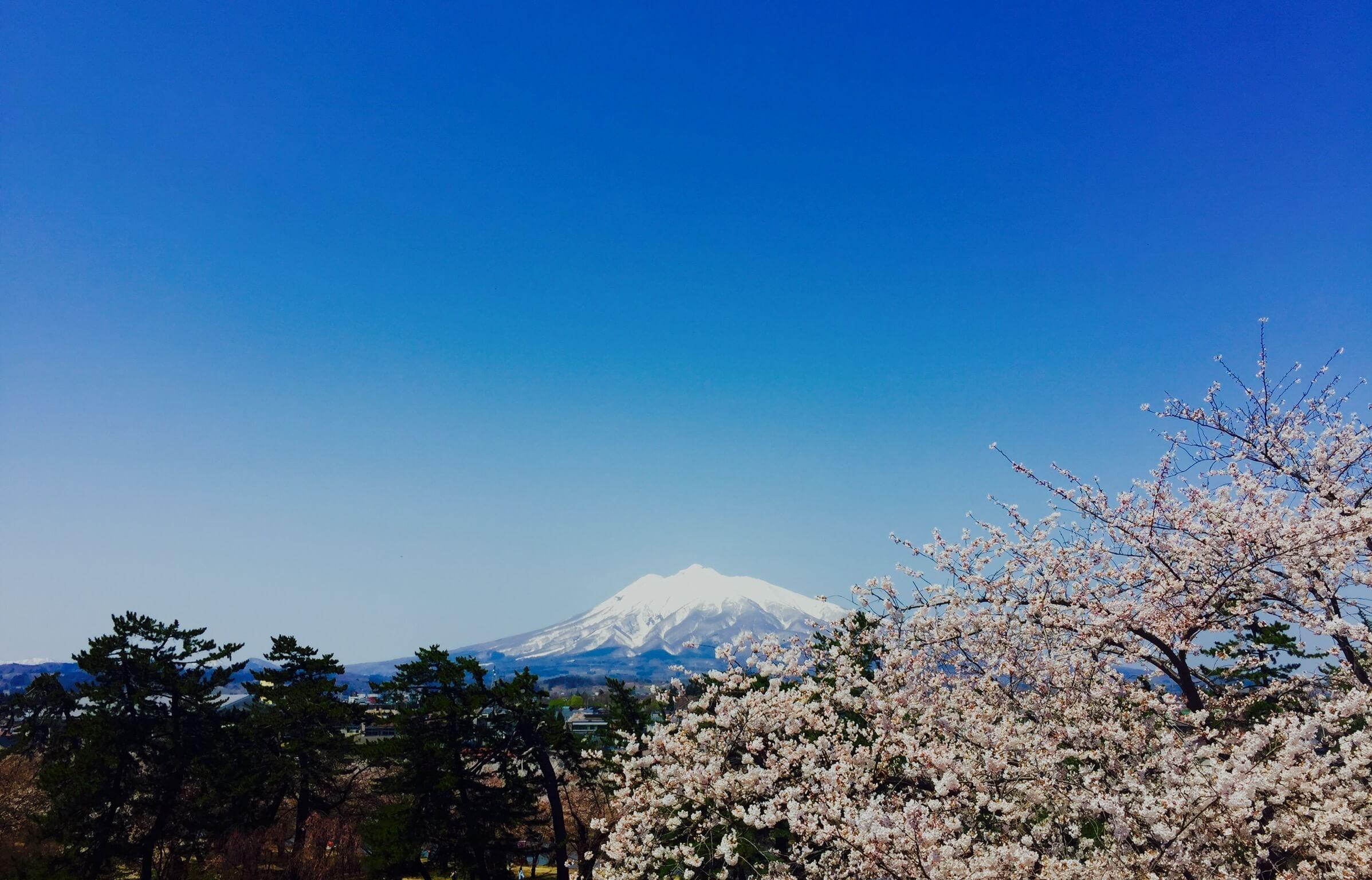 藍天、岩木山、櫻花。