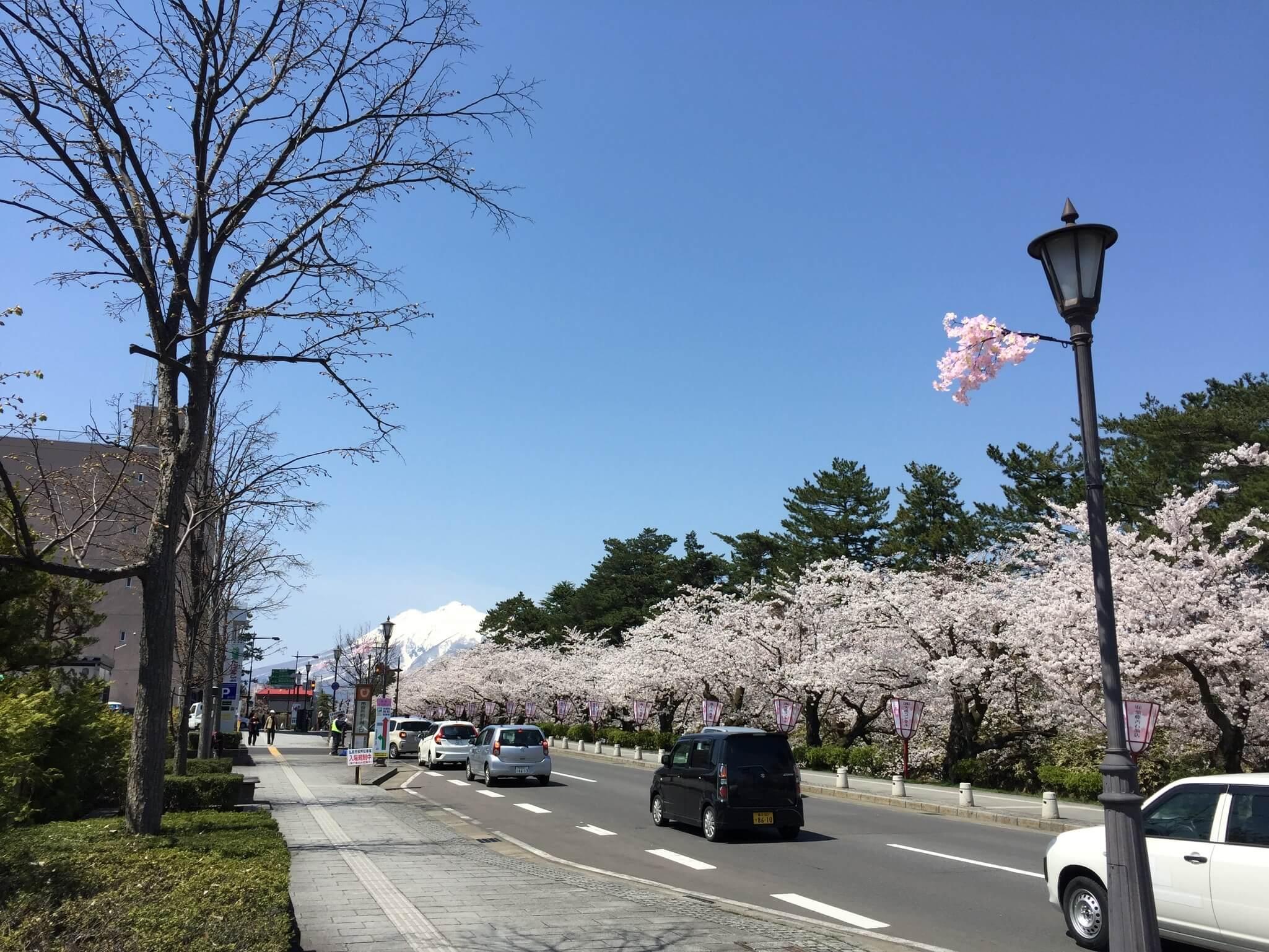 櫻花爆炸爆炸的開。