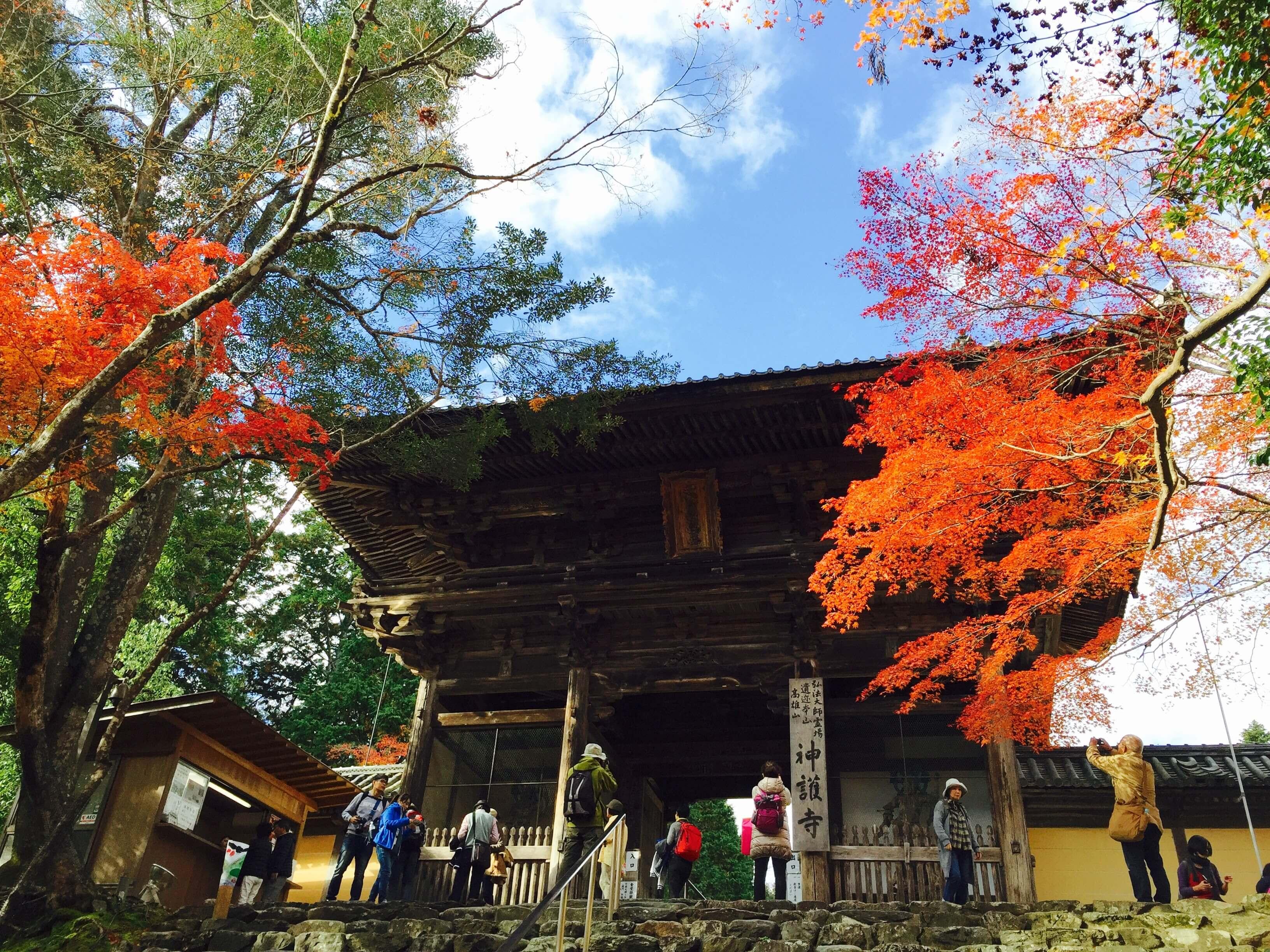 京 都 鮮 少 人 知 的 淨 地 。