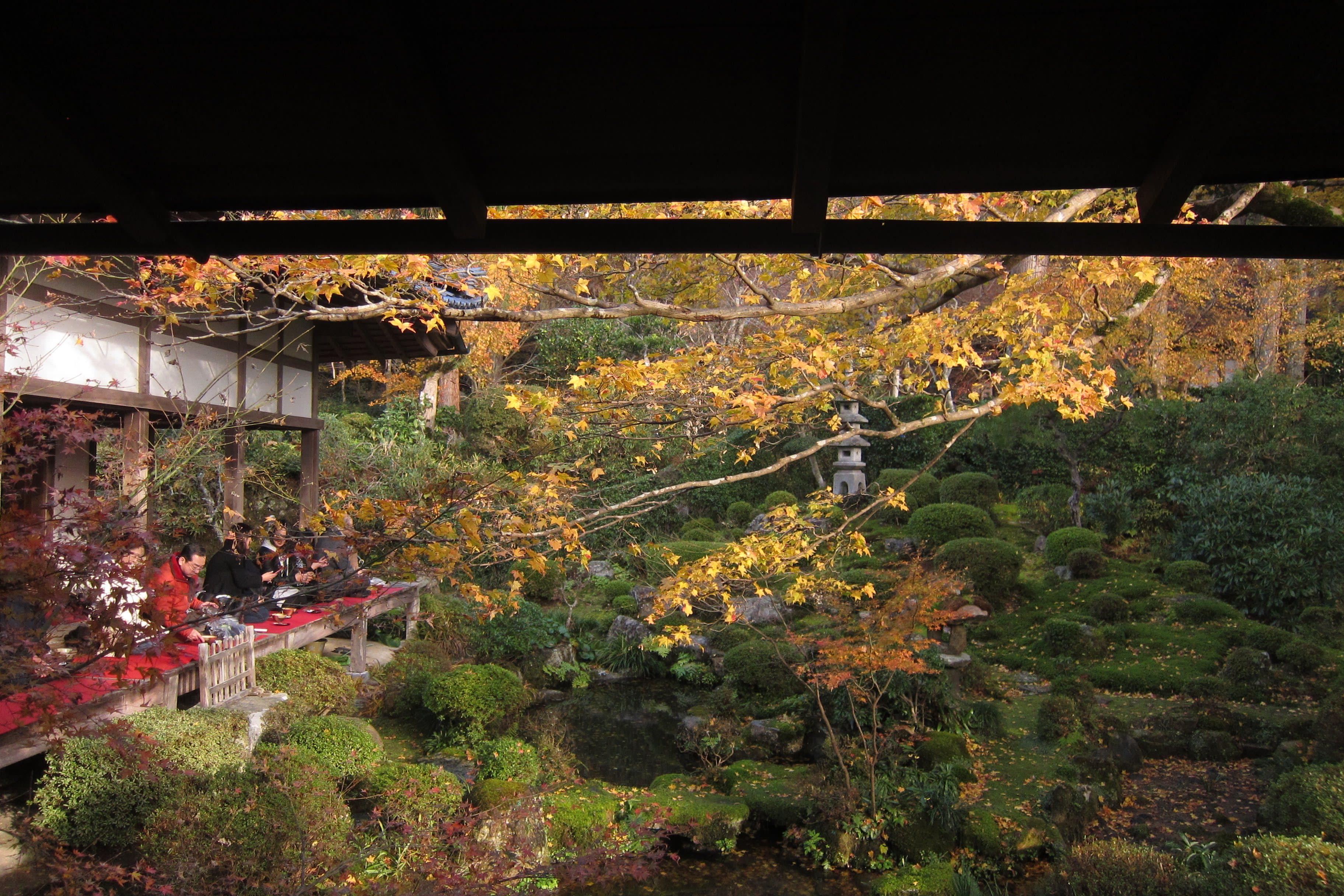 庭院裡綠、紅、黃三種顏色交錯