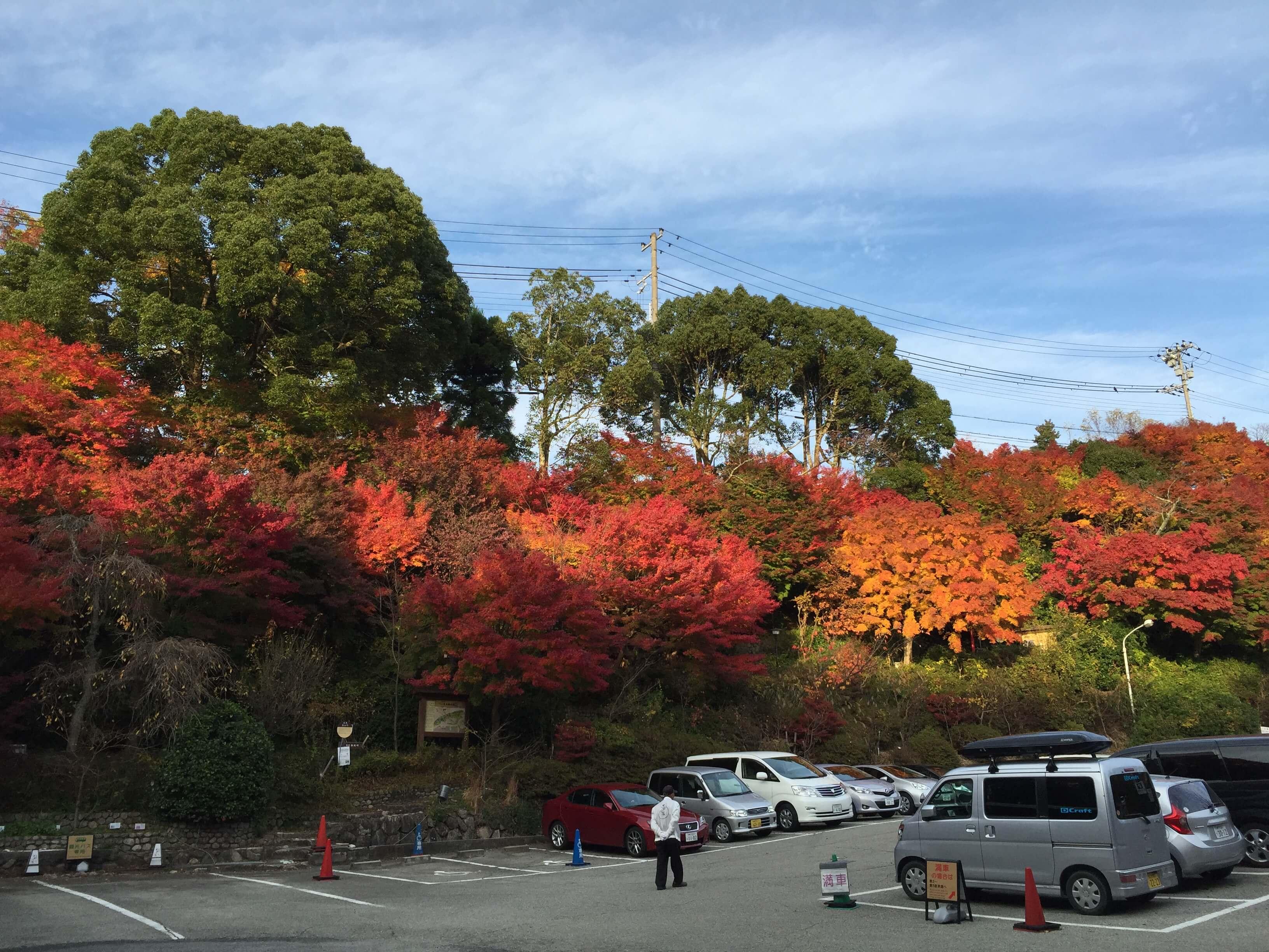 太 閤 の 湯 門 口 的 燦 爛 楓 紅