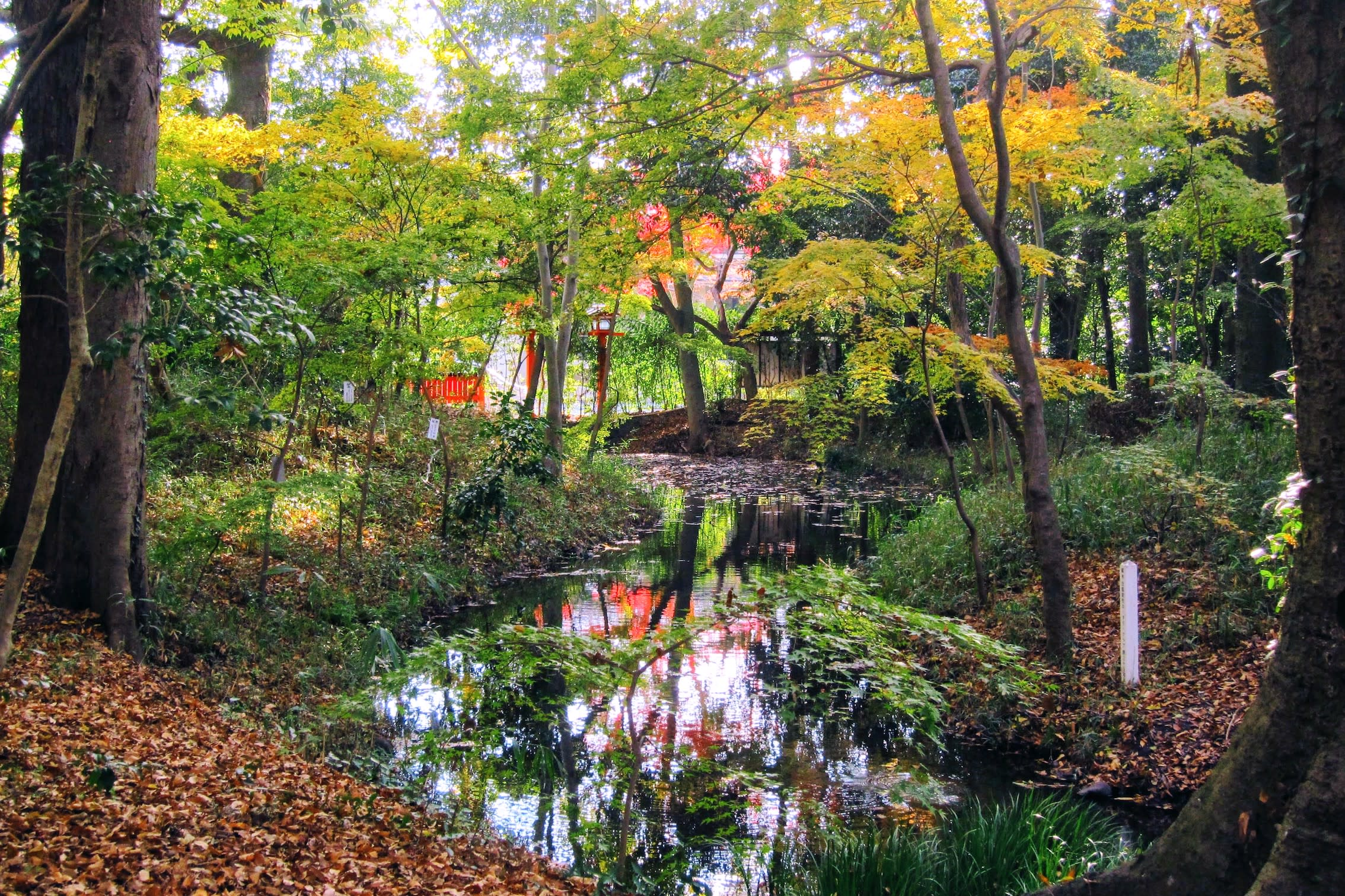 森林中的小小溪流 Photographer / safu