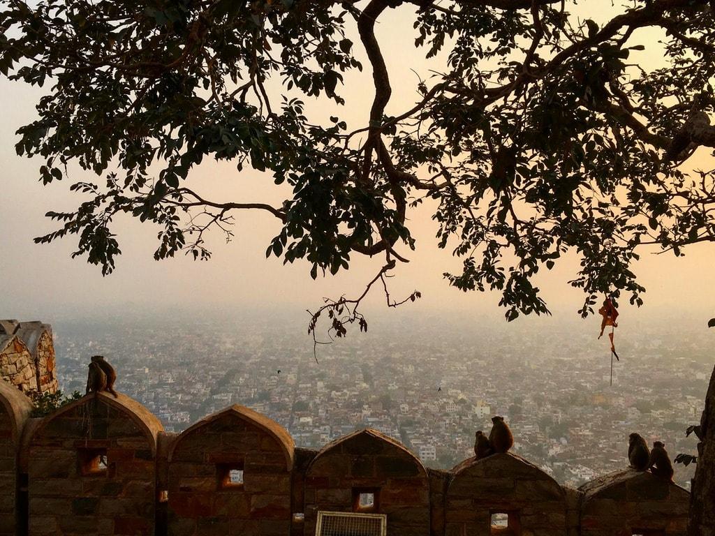 2017的尾聲, 我在Jaipur跨年, 捕捉到猴子們望向夕陽西下的瞬間, 就好像在對舊的一年說再見! Pic/Facebook: TraveLinArt2017