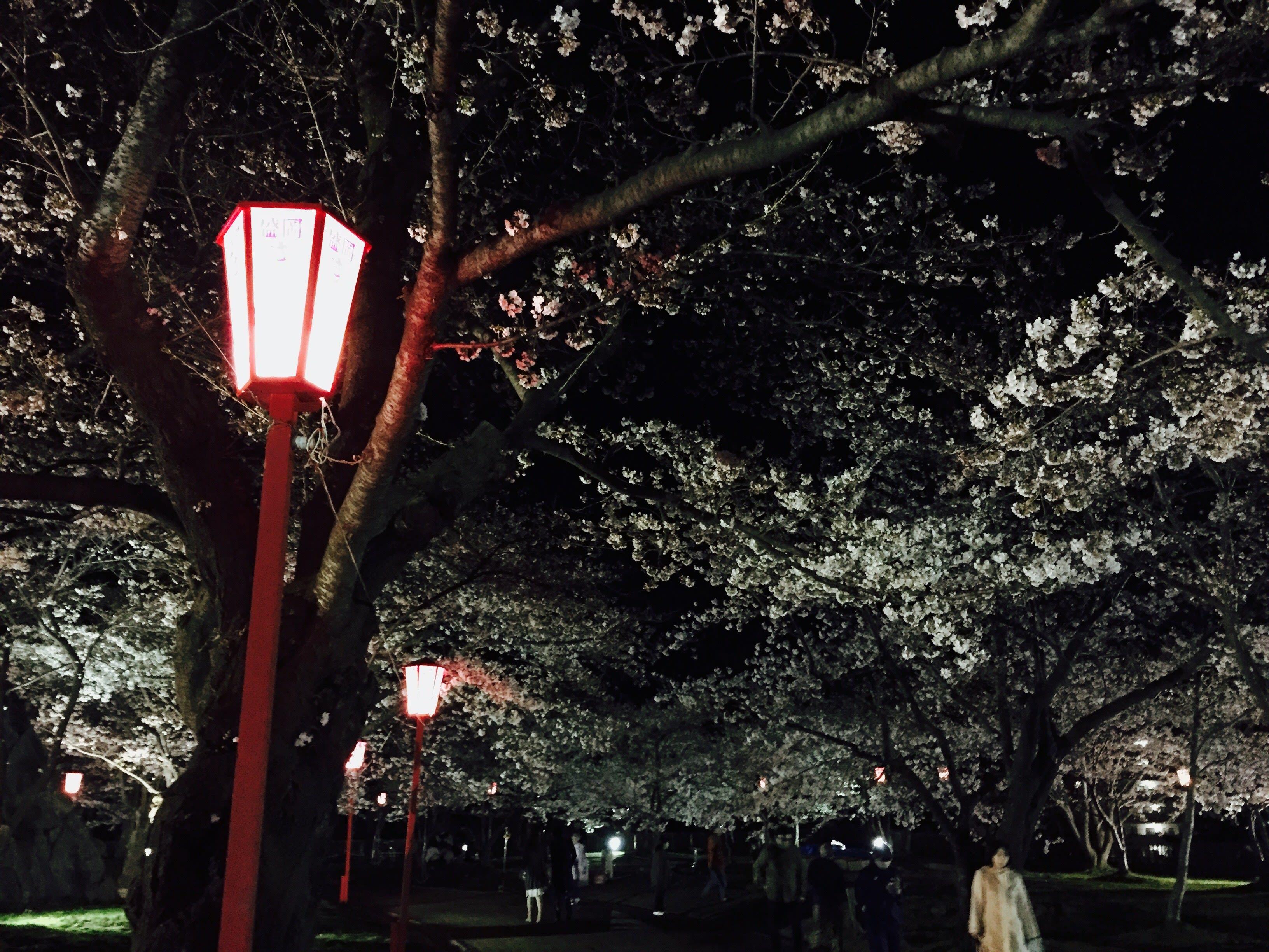 夜遊盛岡城跡公園。 Photographer | Zach Huang