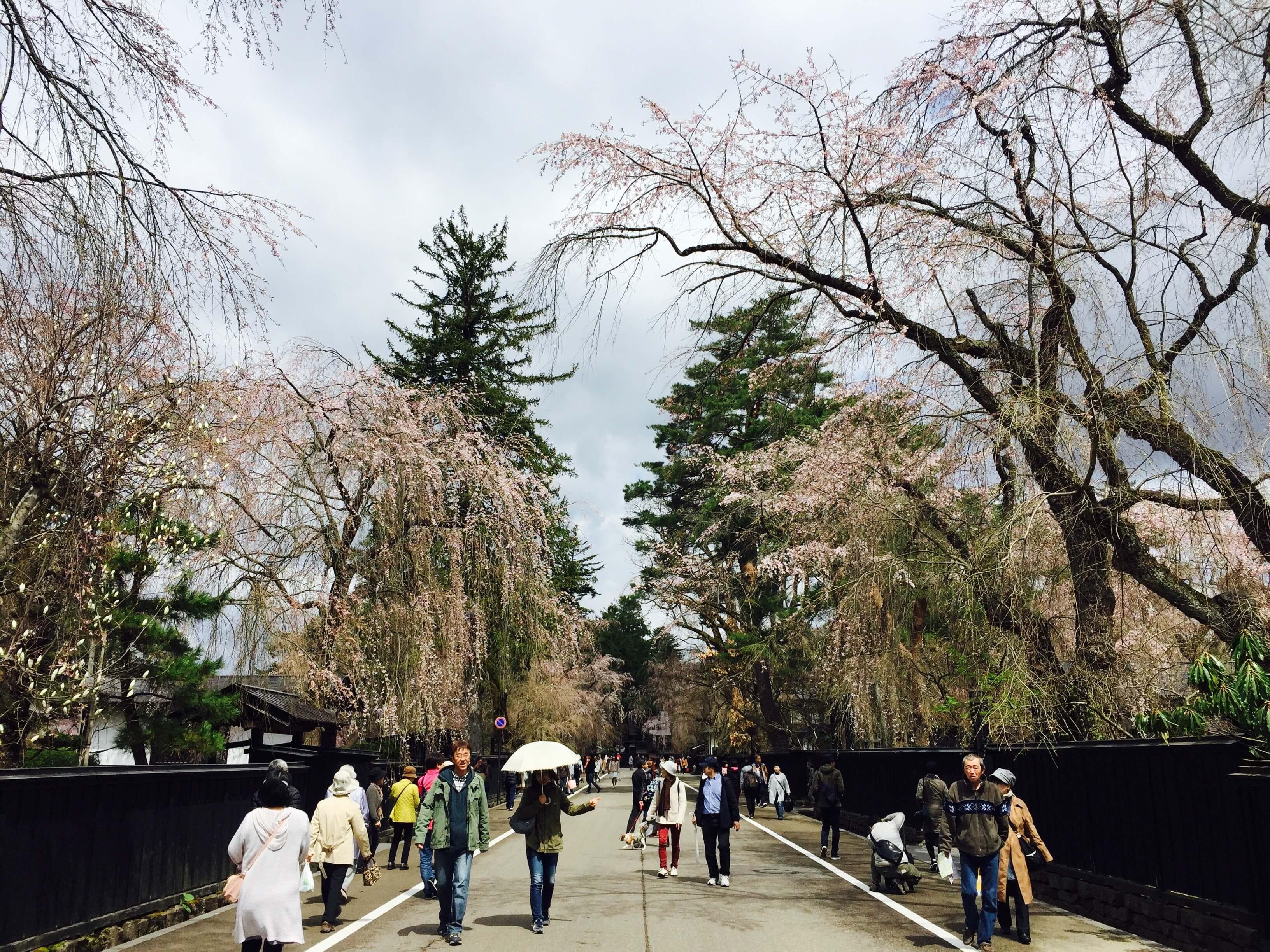 櫻花還沒開的 武家屋敷 。 Photographer | Zach Huang