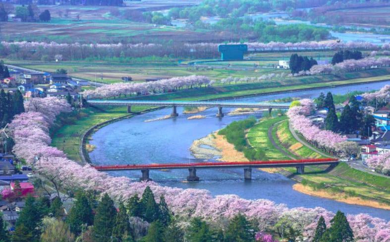 檜木內川堤櫻花滿開模樣。 Photographer | 絕景日本