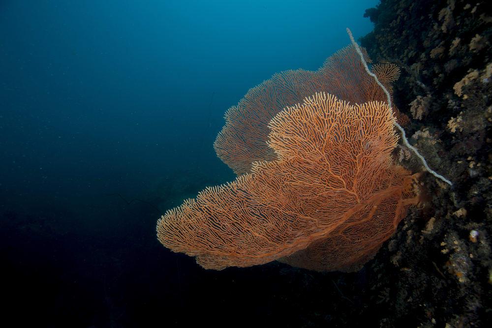 Tioman-Diving