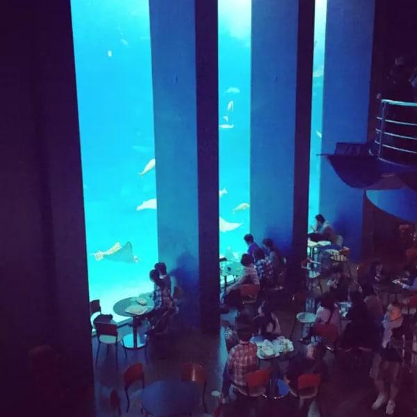 美 麗 水 族 館 內 咖 啡 館