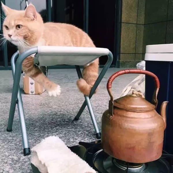 可 愛 貓 咪 。
