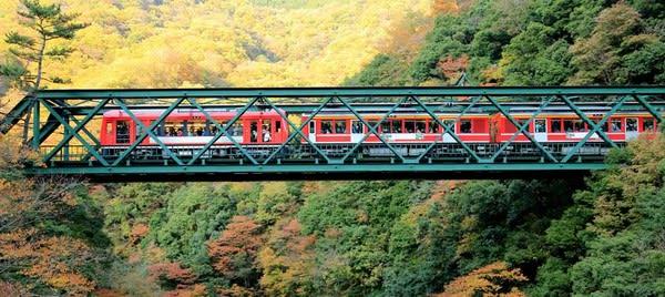 坐 著 箱 根 小 火 車 穿 梭 在 秋 紅 中( 圖 片 來 源 : goo.gl/f63jzb )