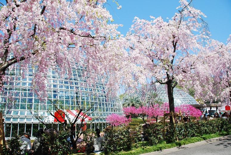 圖片來源:名古屋觀光會議協會