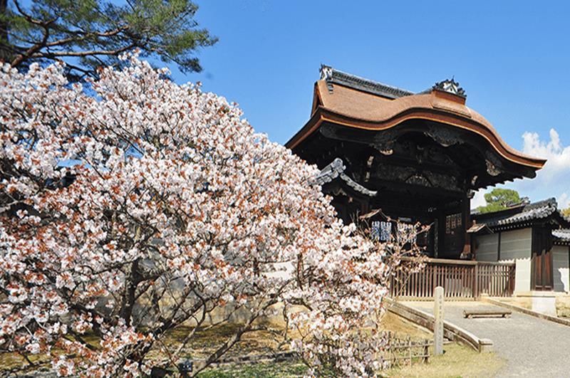 仁和寺(照片來源:仁和寺官網)http://www.ninnaji.jp/
