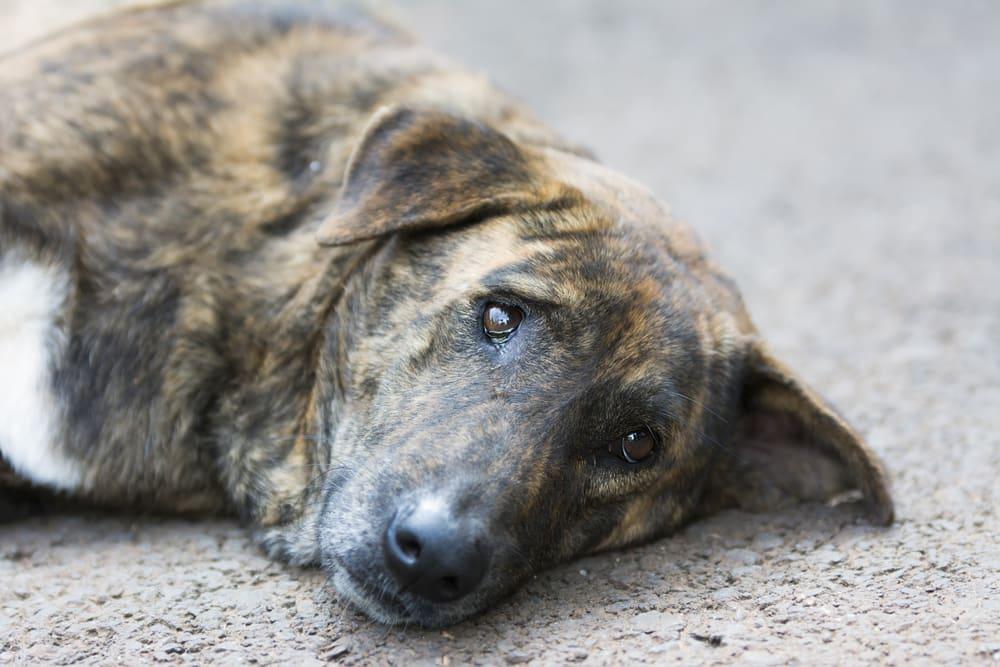 流 浪 狗 狗 們 , 其 實 正 在 我 們 生 活 中 的 角 落 中 尋 求 生 存