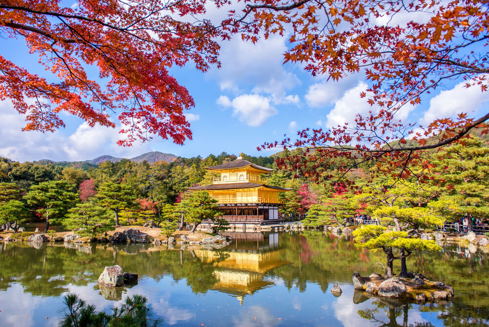 率性型賞楓攻略 楓 葉 映 照 在 金 閣 寺 的 金 光 上