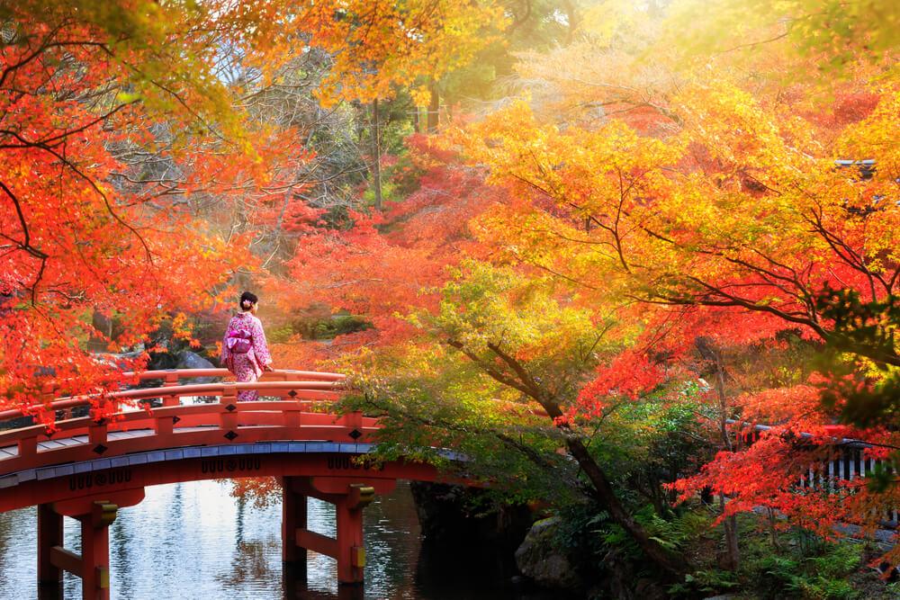 清 雅 楓 紅 , 韓 國 、 日 本 、 台 灣 都 是 你 最 佳 選 擇