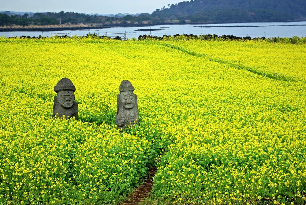 台北飛濟州 : 虎航