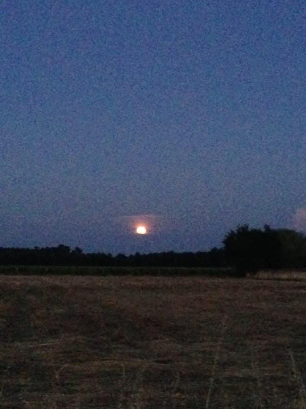到 了 夜 晚 , 田 裏 非 常 陰 暗 、 荒 涼 。
