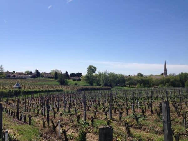 種 植 葡 萄 的 田 地 。