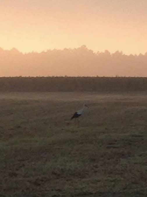 最 後 的 最 後 , 放 上 酒 莊 生 活 中 最 喜 歡 的 一 張 照 片 , 清 晨 站 在 草 地 上 的 丹 頂 鶴 。
