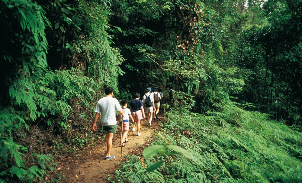 khu bảo tồn thiên nhiên bukit timah