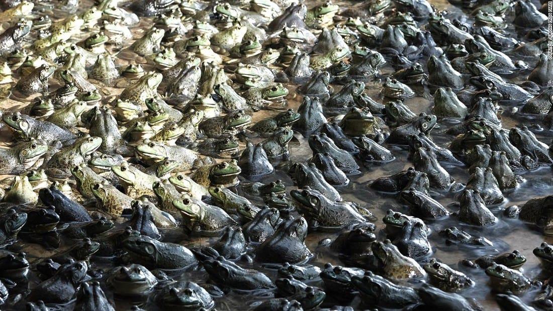 trại ếch ở jurong
