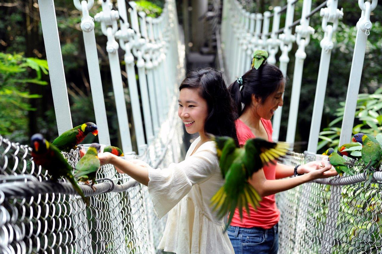 cho chim ăn tại vườn chim jurong