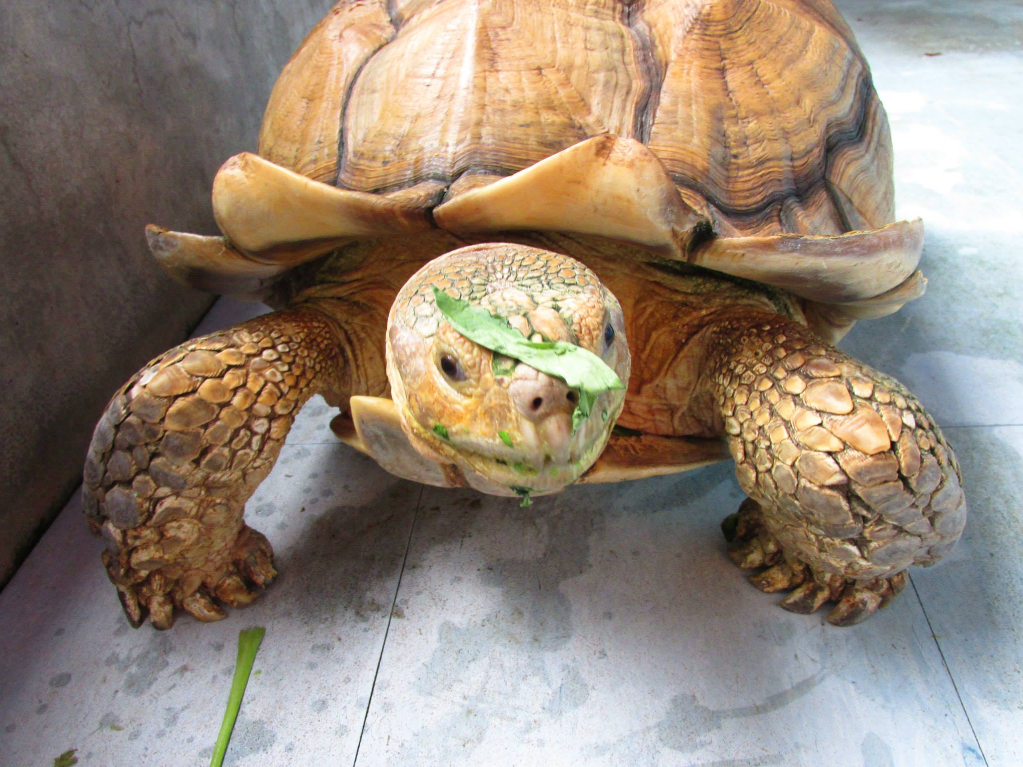 rùa cạn tại khu vườn trung quốc