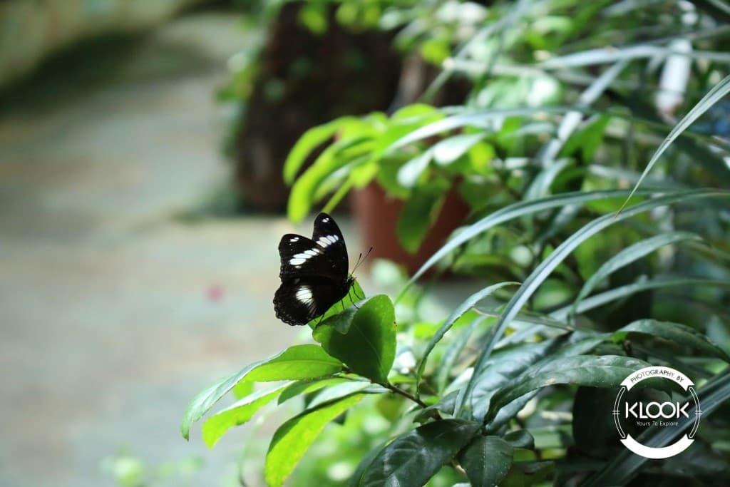 bươm bướm tại trung tâm khoa học singapore
