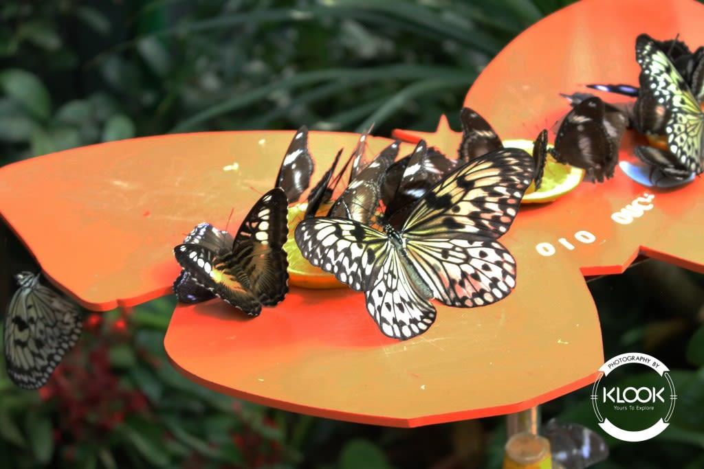 đàn bướm tại trung tâm khoa học singapore