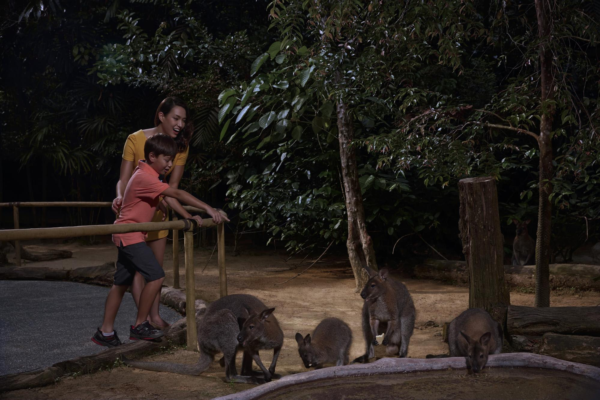 night safari singapore: wallaby