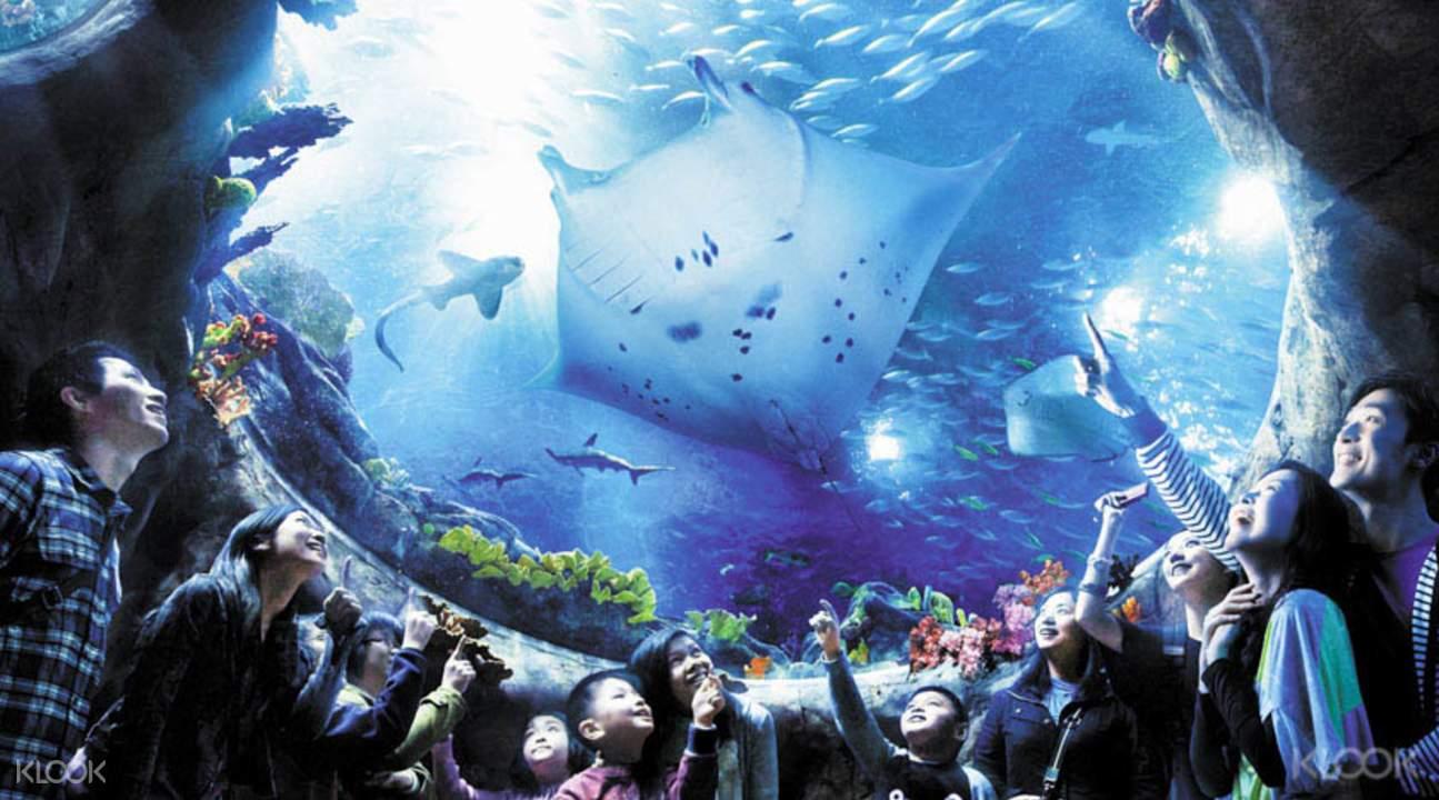 cuối tuần ở hong kong: công viên đại dương