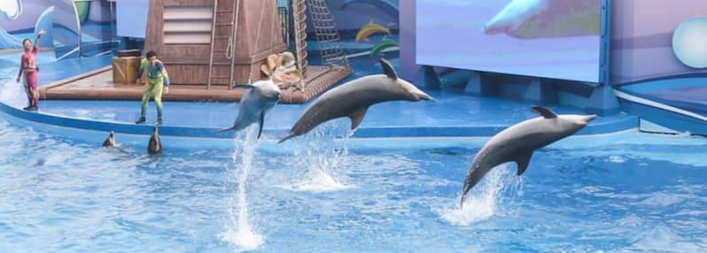 vui chơi ở công viên đại dương hong kong:: ngắm cá heo tại nhà hát đại dương