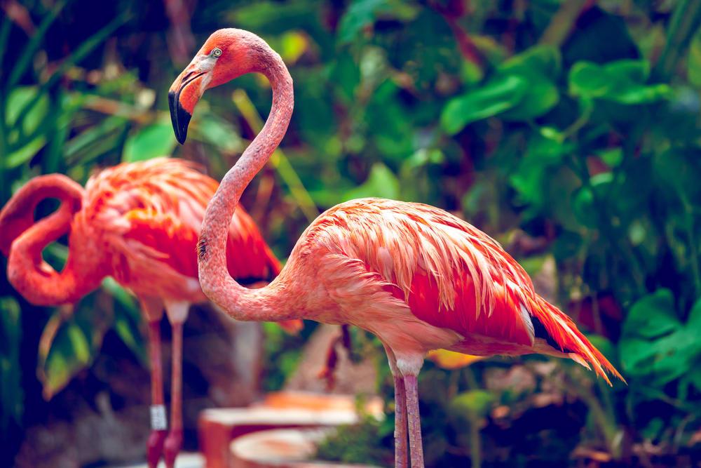 khám phá thiên nhiên ở singapore tại sở thú singapore