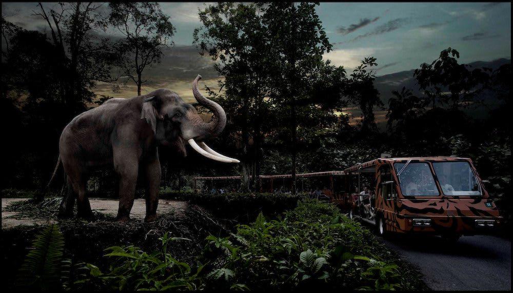 khám phá thiên nhiên ở singapore tại vườn thú đêm singapore