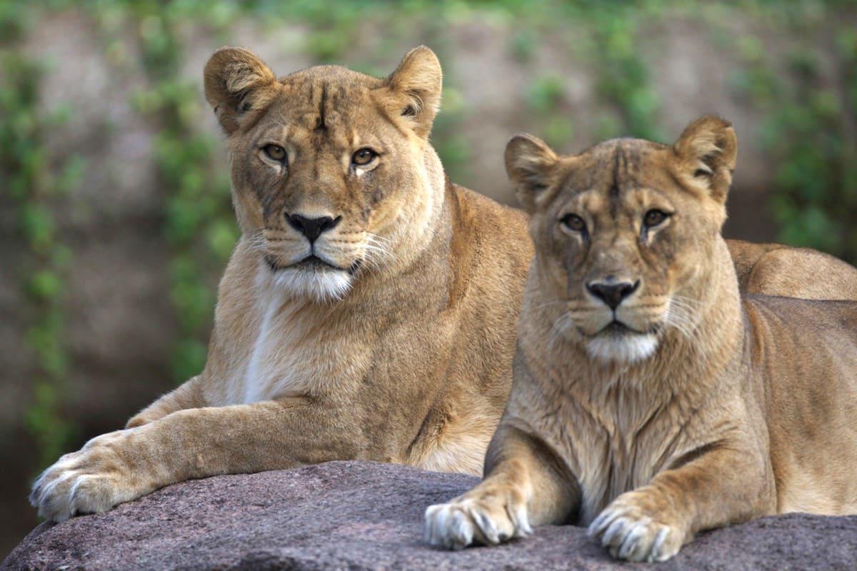72 giờ ở osaka: sở thú tennoji