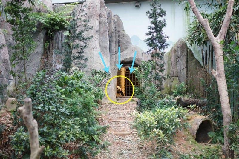 khám phá river safari với gấu trúc khổng lồ