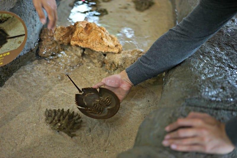 khám phá river safari với hồ tương tác
