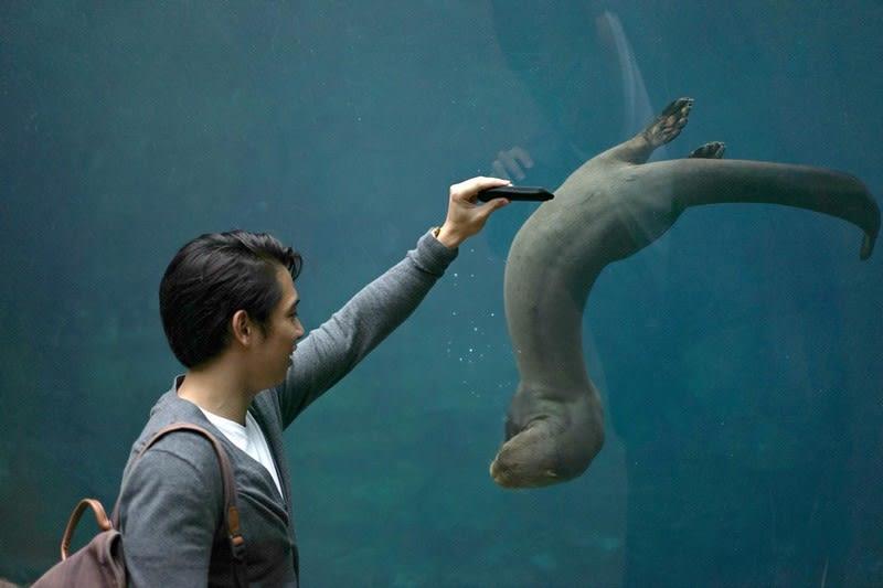 khám phá river safari: xem rái cá giant river