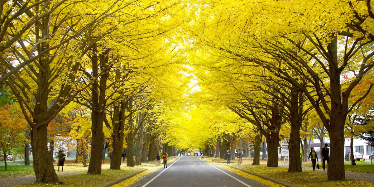 mùa thu ở hokkaido