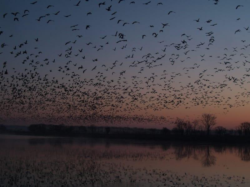 mùa thu ở hokkaido: ngắm chim lúc hoàng hôn