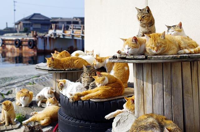 làng mèo huotong