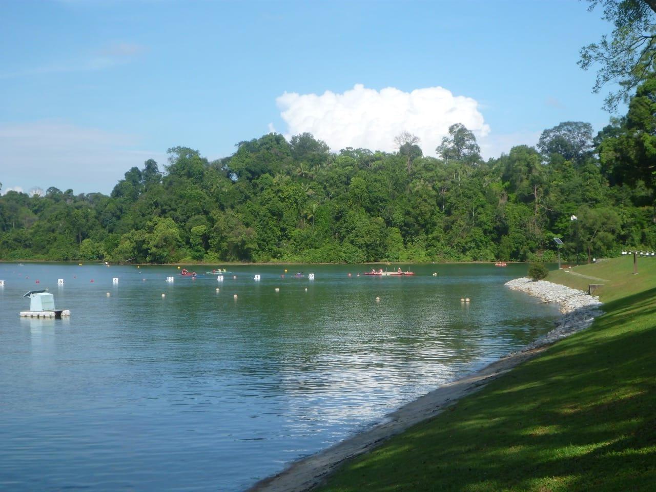 ghé khu bảo tồn macritchie là một trong những điểm đến ở singapore cho hội độc thân
