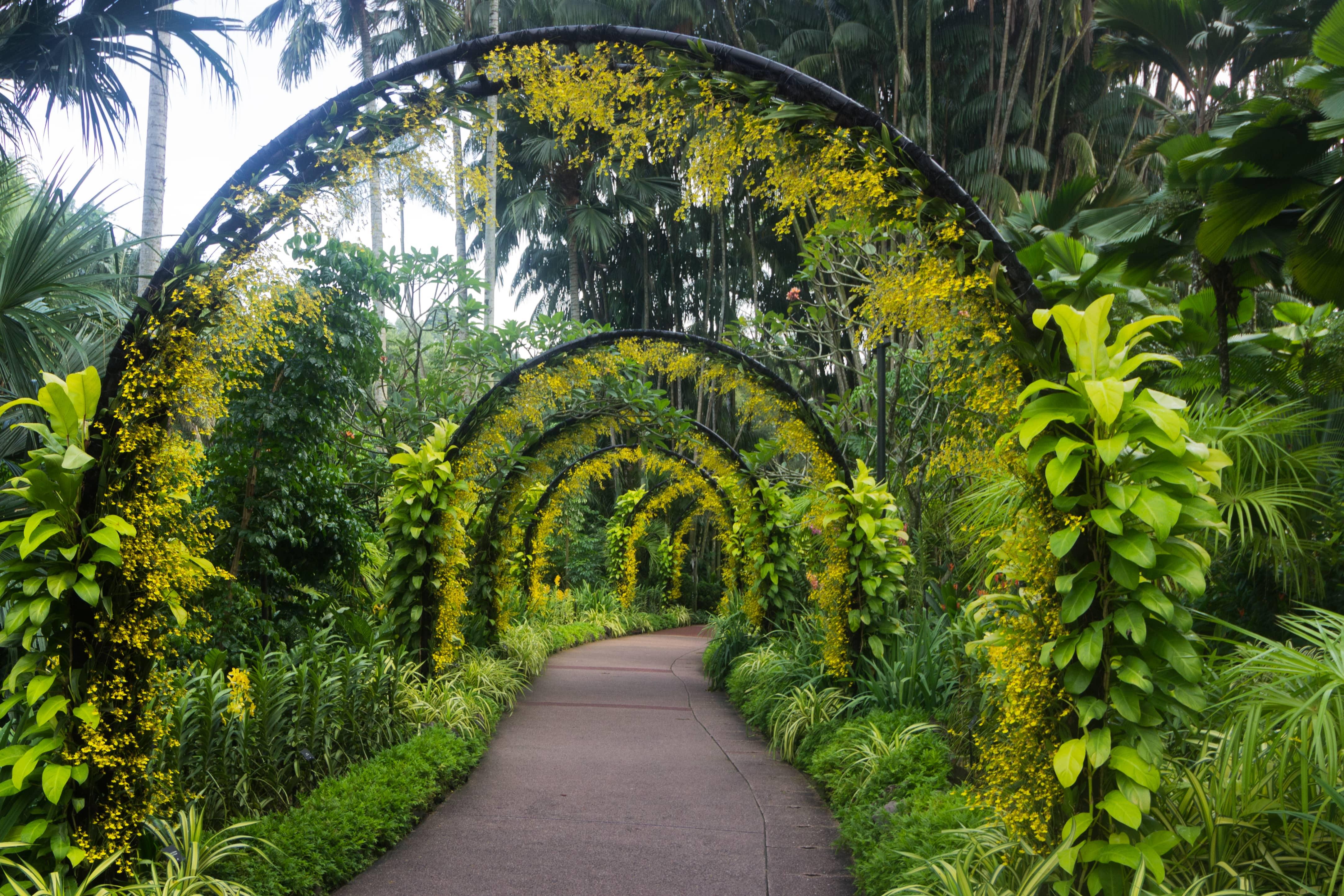 vườn bách thảo là một trong những điểm đến ở singapore cho hội độc thân