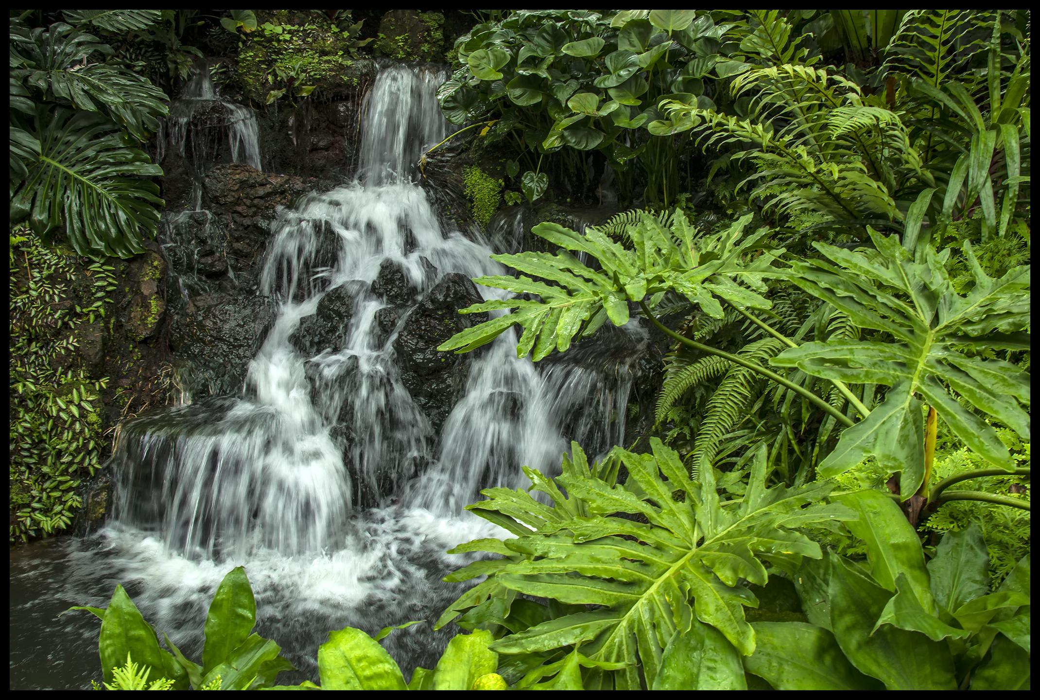 vườn bách thảo singapore là một trong những điểm đến ở singapore cho hội độc thân